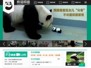 Круглосуточное «реалити-шоу» о пандах